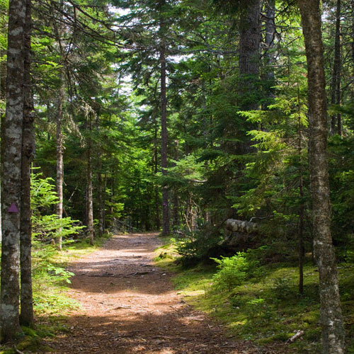 Walking Trails | Uniacke Estate Museum Park